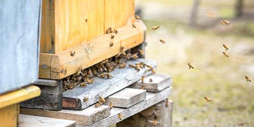 pszczoly_ule_3.jpeg
