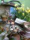 Galeria goworów stoły wiel