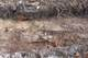 Galeria wykopaliska Miedzylesie